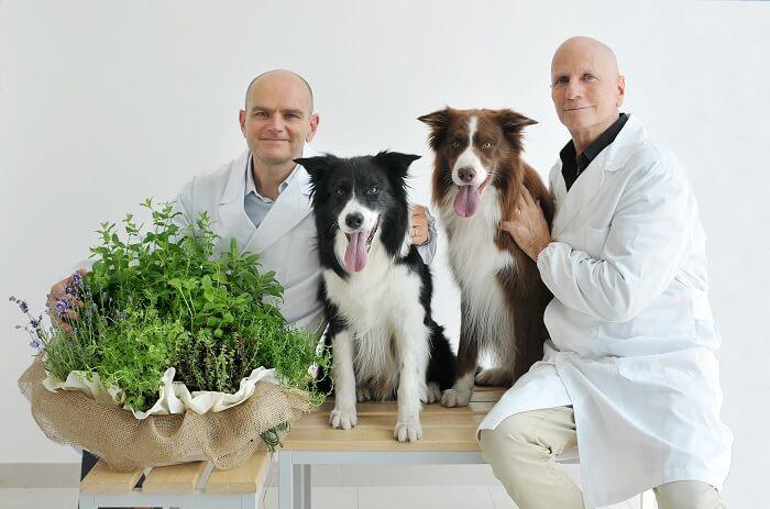 Неприятный запах изо рта у собак: причины и лечение
