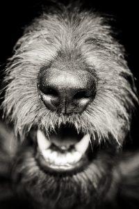 Здоровье полости рта: зубной камень и неприятный запах изо рта у собаки