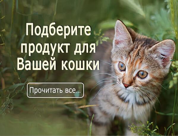 scopri-gattoRU