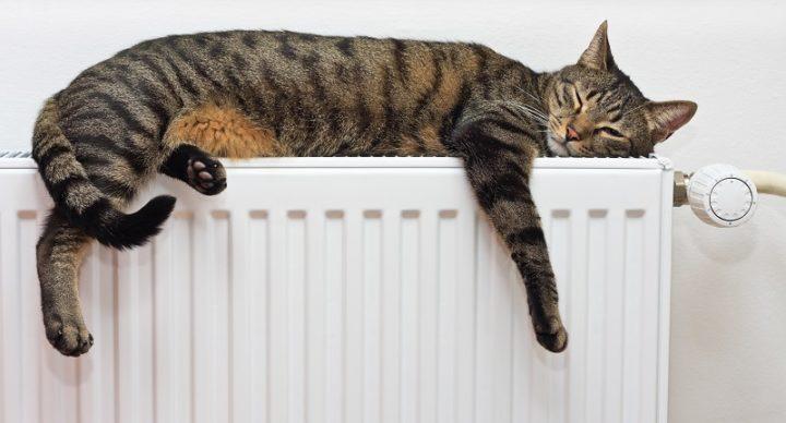 Виды болезней ушей у кошек и их лечение