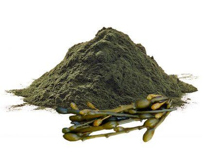 Узловатый аскофиллум
