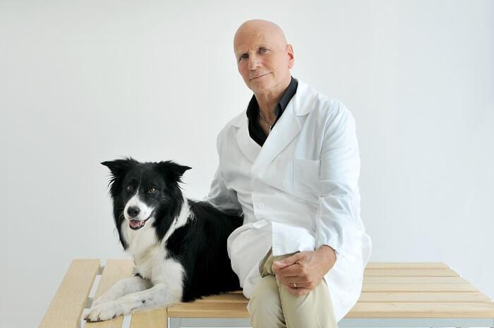 Пищевая аллергия у собак: симптомы, лечение, профилактика