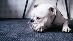 Пищевая аллергия у собак фото Форца10 Форза10 Forza10