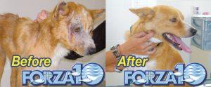 Лечение кожных заболеваний у собак лечебный корм фото