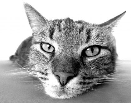 Дерматит у кошек: причины и лечение на сайте Forza 10