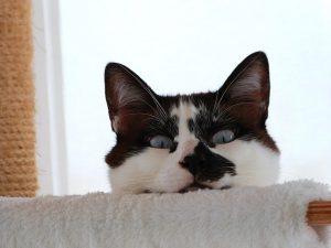 Энтерит у кошек из-за чего возникает заболевание?