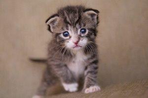 Что такое энтерит у кошек?