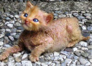 Forza10 корм для лечение дерматита у кошек