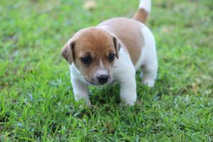 щенок на травке - диарея у щенков