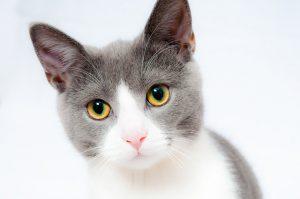 Зуд у кошек как помочь?