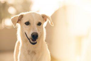 Что такое энтероколит у собак, симптомы и лечение Форза10 Фоца10 Forza10