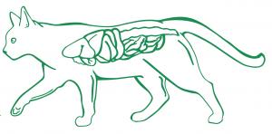 Колит у кошек воспаления в толстом кишечнике