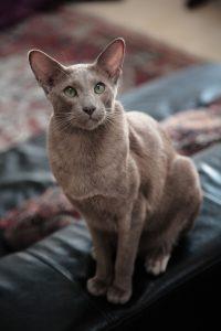 как помочь при энтероколите у кошки фото из статьи Форца10 Форза10 Forza10