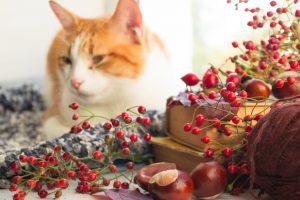 Если у кошки выпадает шерсть, диета Forza10 поможет восстановить защитные силы организма
