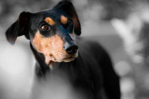 причины энтерита у собак фото к статье Форца10 Форза10 Forza10