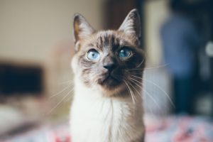причины энтероколита у кошек фото из статьи Форца10 Форза10 Forza10