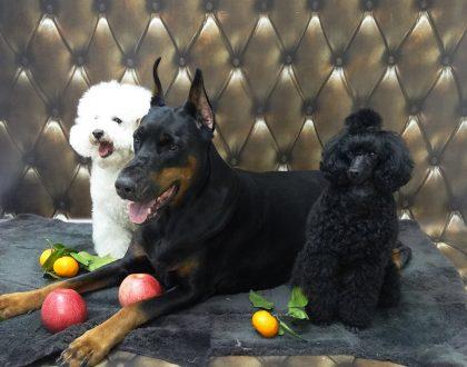 Я - счастливый владелец трёх собак - отзывы корма Форца10 Форза10 Forza10