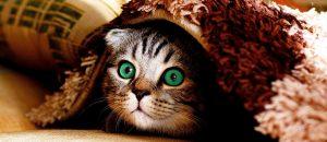 Стрессовые состояния могут вызывать колит у кошек