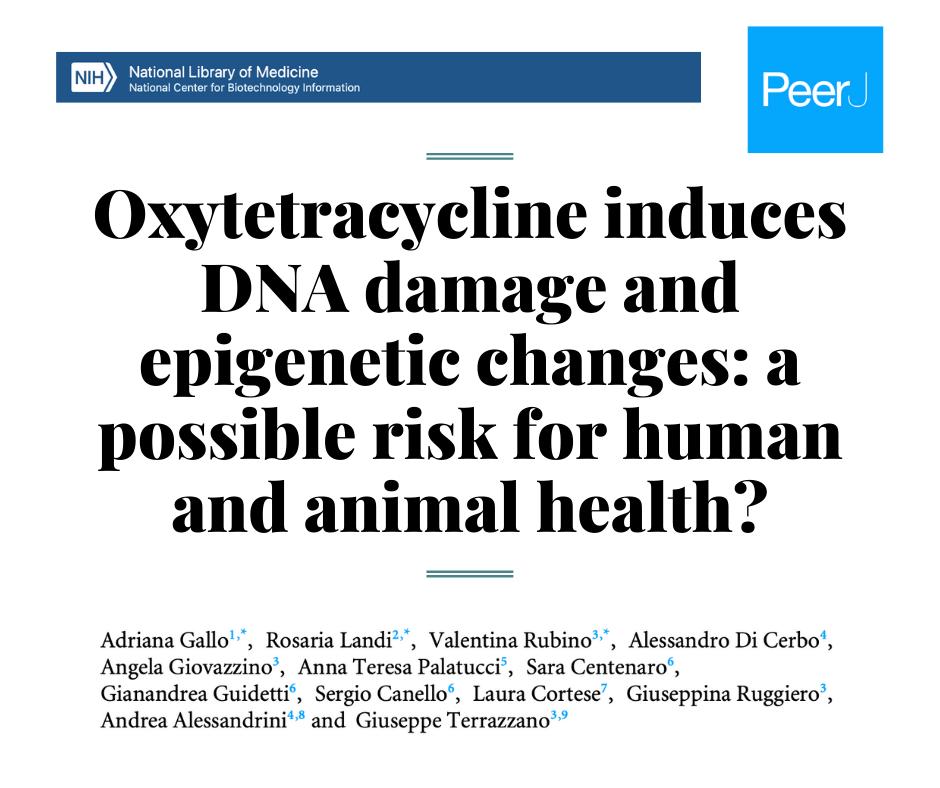 Окситетрациклин вызывает нарушение ДНК и эпигенетические изменения