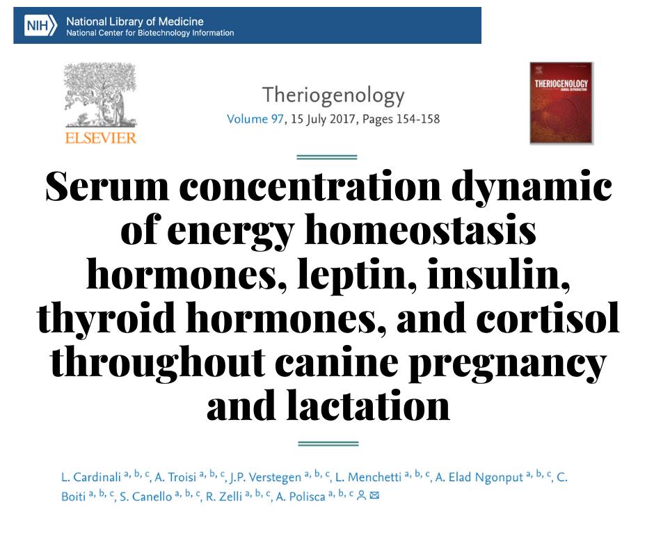 Гормональные изменения во время беременности и лактации у собак