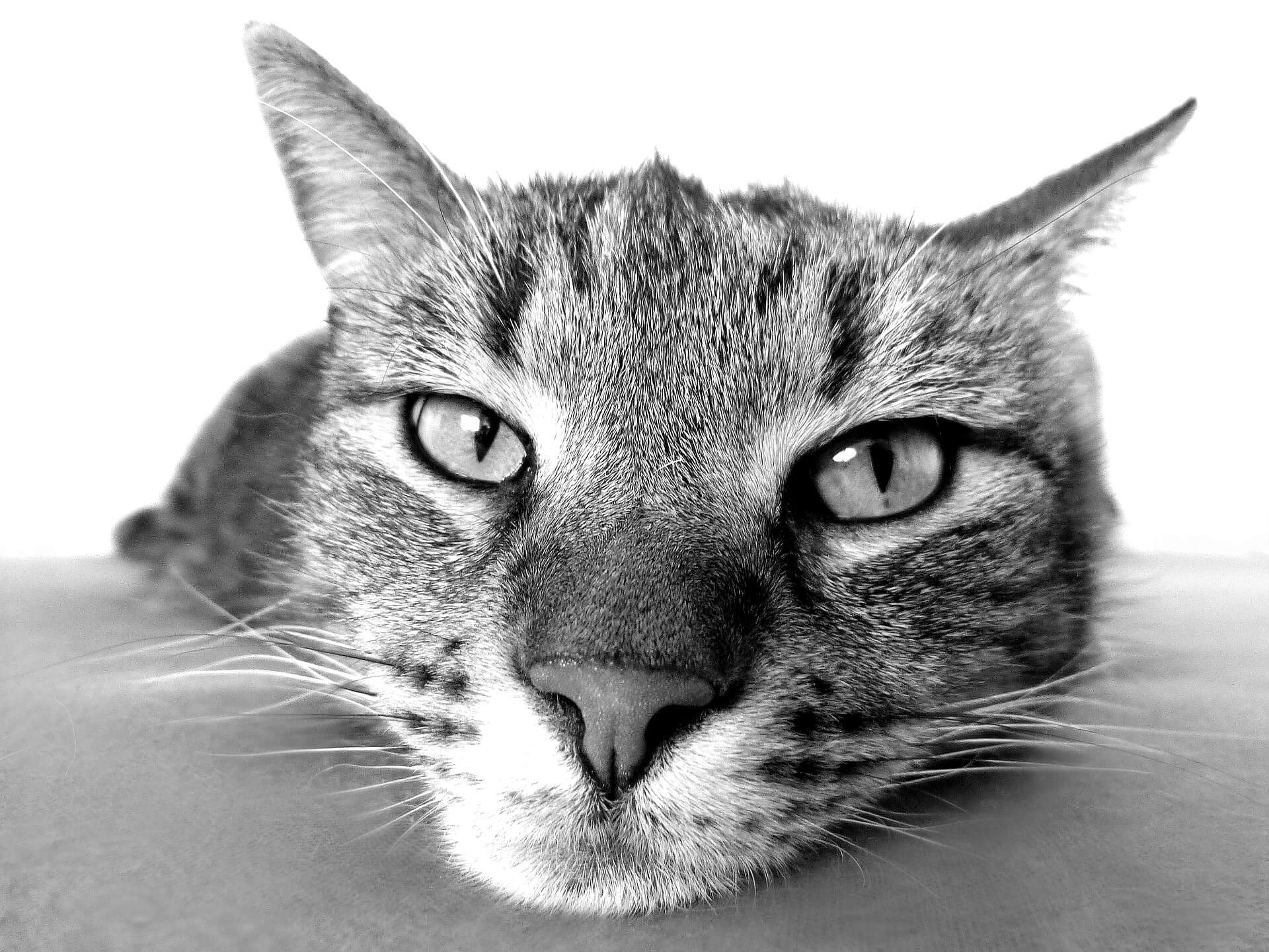 Основные причины и пути лечения дерматита у кошек