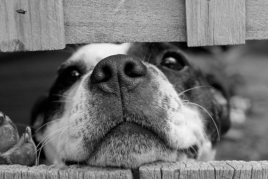 зуд у собак лечение и профилактика