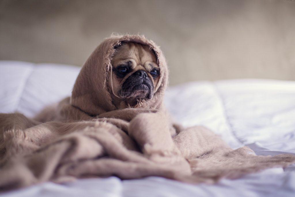 Собака заболела колитом