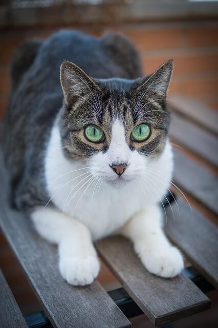 Зуд у кошек и проявления болезни