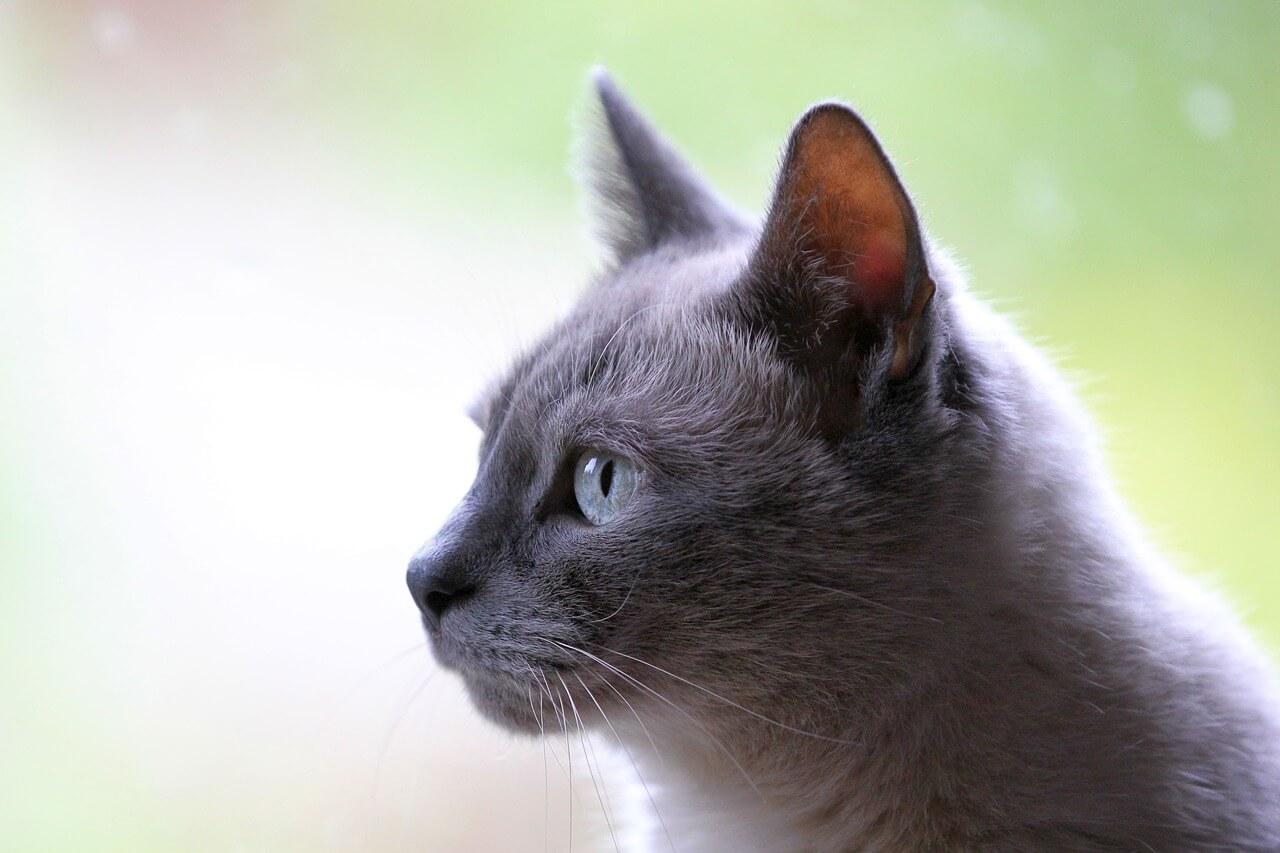 колит у кошек и из-за чего он возникает? Форца10 Форза10 Forza10