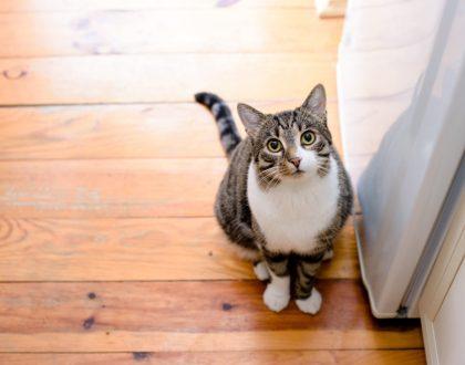 у кошки выпадает шерсть лечебные корма Forza10 Форца10 Форза10
