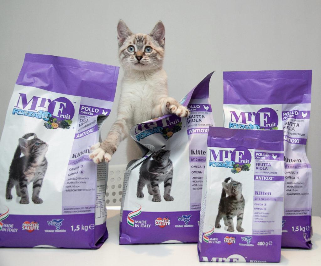 Наш спасенный котенок Мартин, растет на Forza10. И доволен!