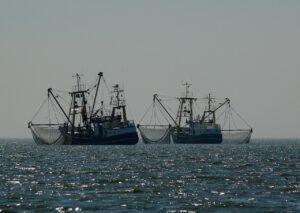 корм для собак с рыбой выловленной в море