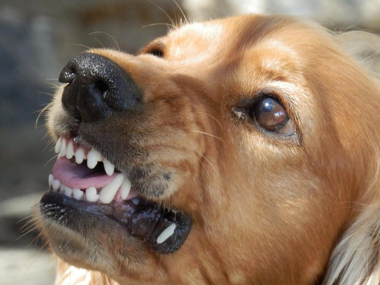 Непредсказуемость, агрессивность собак