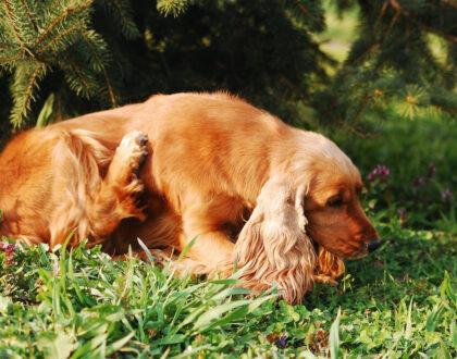Пищевая непереносимость у собак