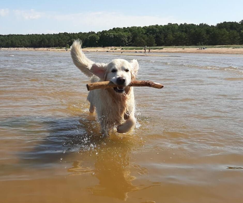 фото собаки по отзыву владельца на корм FORZA10 DERMO ACTIVE