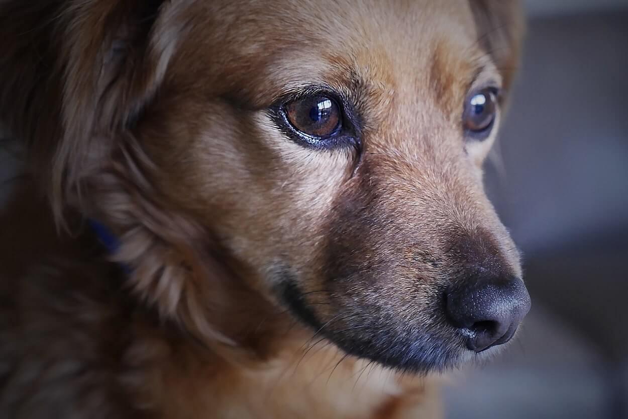 Гиардии (giardia) у собак