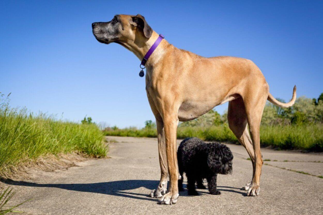 Питание маленьких собак