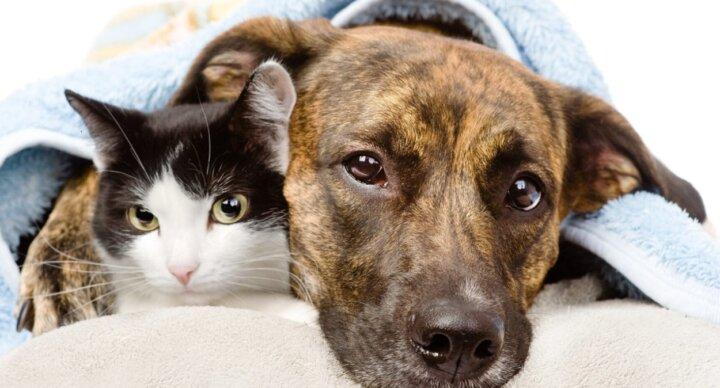 Омега 3 и Омега 6 в корме для собак и кошек