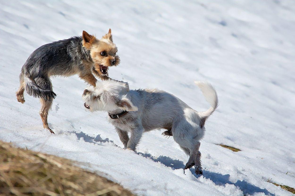 Поведение маленьких собак