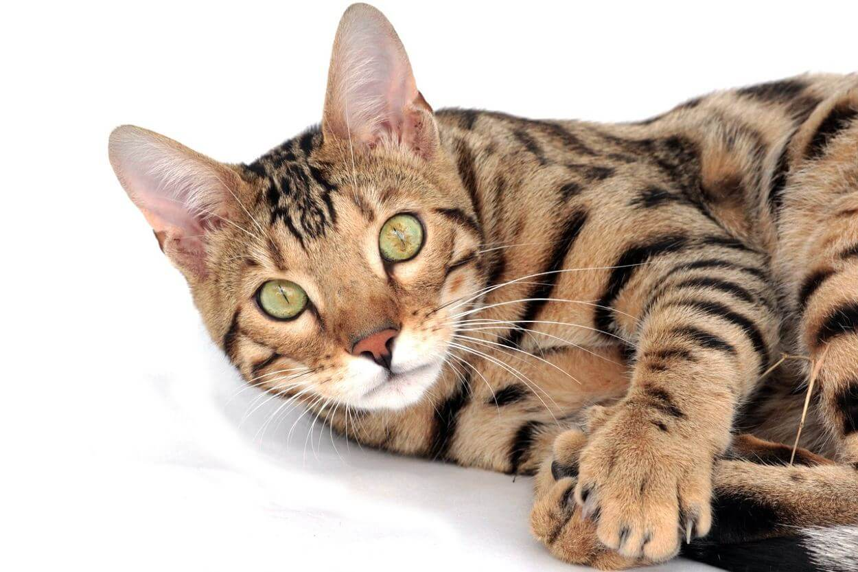 Решение при гастрите у кошек