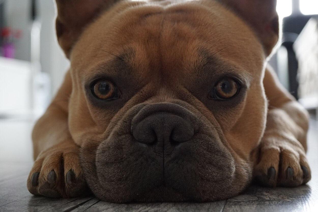 Решение проблем с кожей у собаки